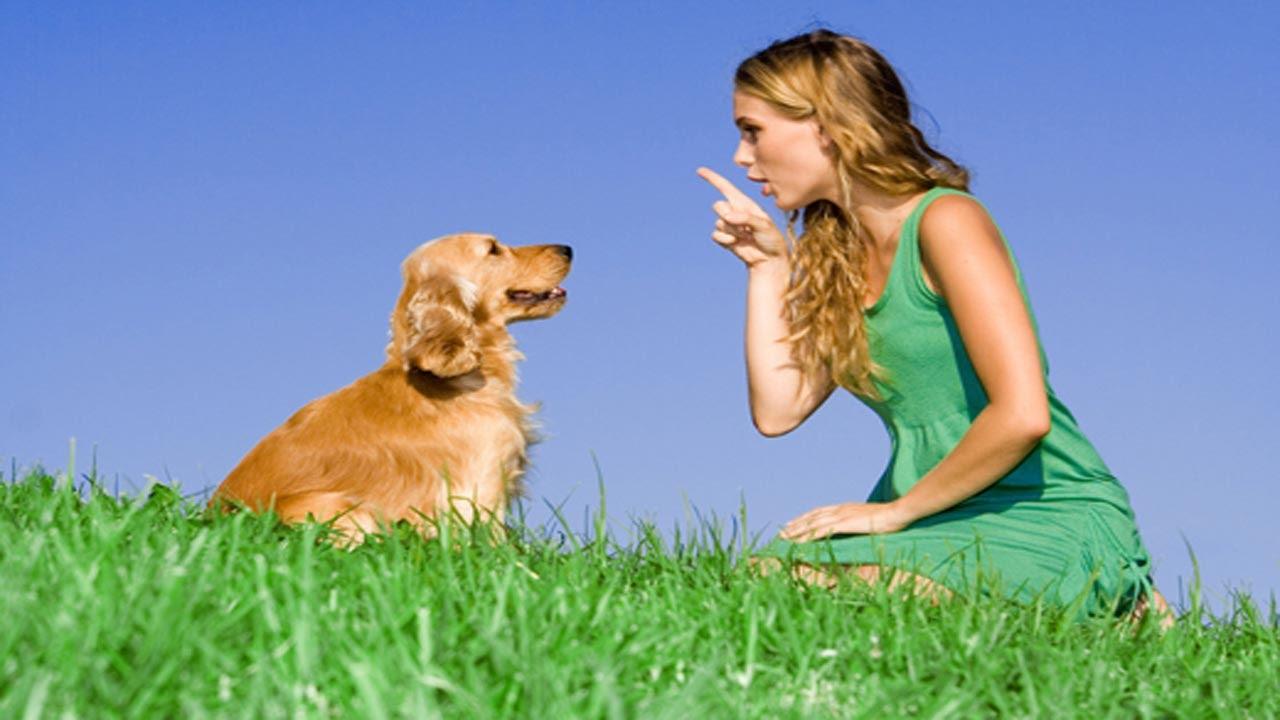 كلب - لغة الحيوانات