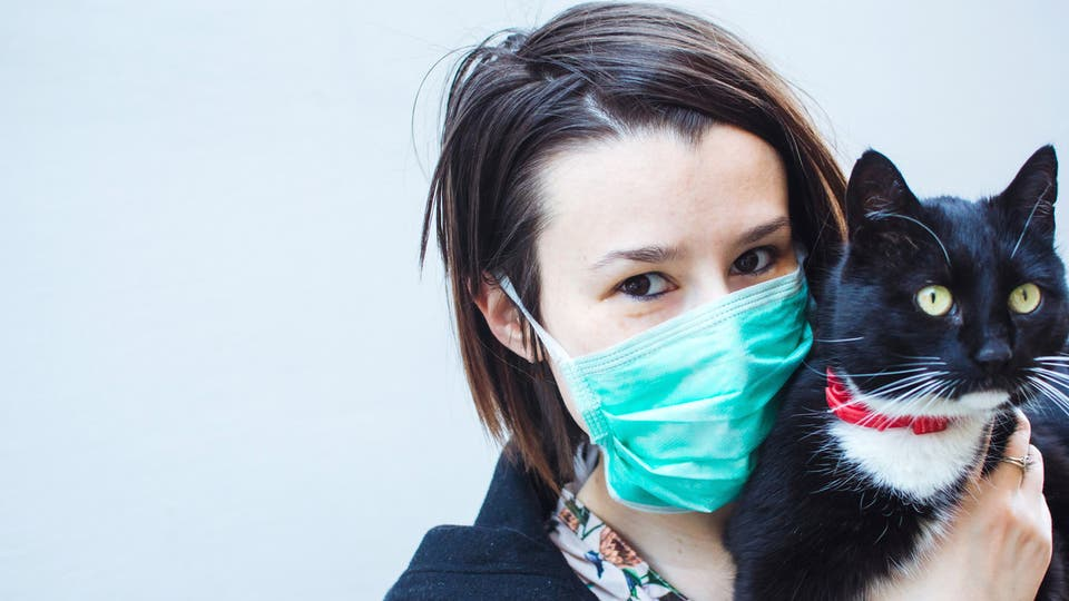 قط - فيروس كورونا