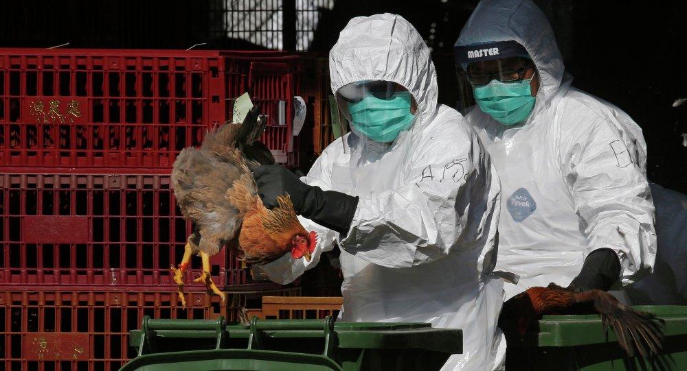 أنفلونزا الطيور