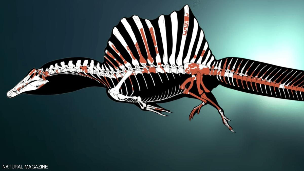ديناصور مائي