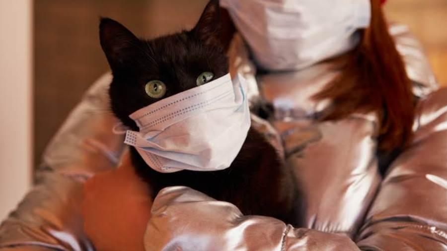 القطط وفيروس كورونا- كورونا